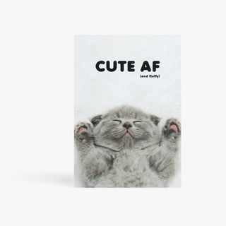 Cute and fluffy cat postcard main image